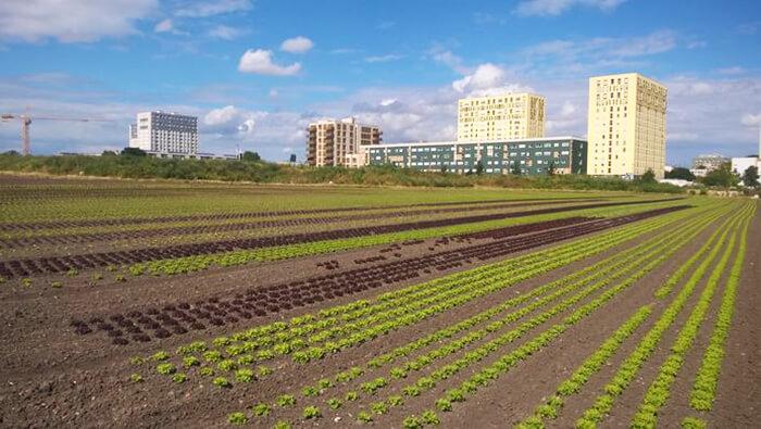 Espace de production agricole périurbain